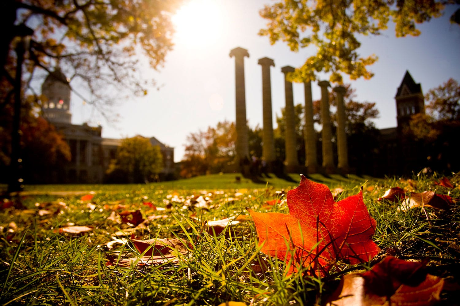 Columns in the fall